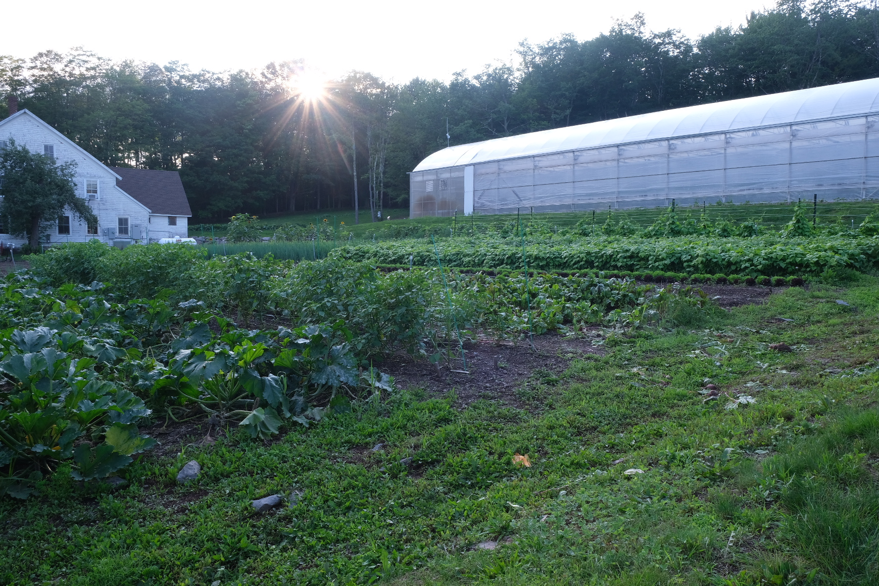 Helping a Community Farm Contribute to a New York Town's Well-being and Economy