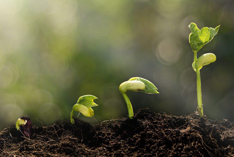 Intern Seed Growth